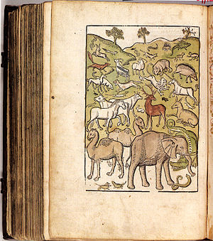 Jacob Bellaert - Illustration from Bartholomeus Anglicus's book Van de proprieteiten der dingen, 1484.