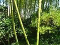 Hakone Gardens, Saratoga, CA - IMG 9149.JPG