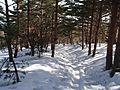 Hallasan Trail.jpg