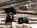 Halle Zoo Bären.JPG