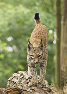 chat gratuit rencontre belgique kawartha lakes