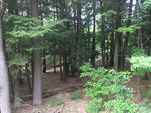 Hartwick Pines State Park - Forest adjacent to visitor center.