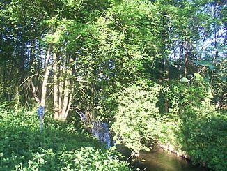 Haustenbach near Staumühle