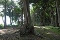 Havelock Island, Forest on the beach, Andaman Islands.jpg