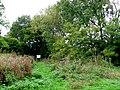 Hazel Wood Hazelbury Bryan. - geograph.org.uk - 1530853.jpg