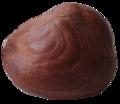 Hazelnut-macro.png