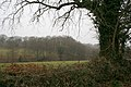 Hemyock, Lickham Bottom - geograph.org.uk - 115773.jpg