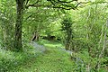 Hemyock, bluebell walk - geograph.org.uk - 173149.jpg