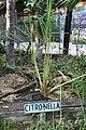 Herbs at Bohol Bee Farm c.jpg