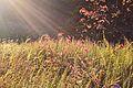 Herrontown Woods Arboretum meadow 01.JPG