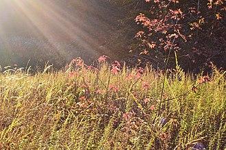 Herrontown Woods Arboretum - Image: Herrontown Woods Arboretum meadow 01