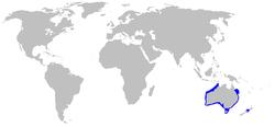 Rango de distribución del tiburón de Port Jackson.