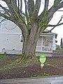 High point Tree preservation (4574406405) (2).jpg