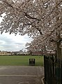 Highfields Park in Spring - geograph.org.uk - 1233879.jpg