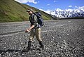 Hiking along Glacier Creek in Denali's backcountry on June 13, 2019. (94bac903-2122-46ea-af76-4091b7c3e9ed).JPG
