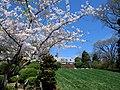Hillwood Gardens in April (17597666671).jpg