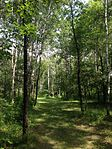 Hole in forest at Lochness Park disc golf course.JPG