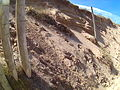 Holywell bay mini sand dunes wire fence cross section 20150812.jpg