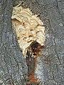 Hornets' nest.jpg