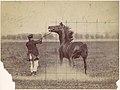Horse MET DP111353.jpg