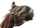 Horse in Haapajarvi.jpg