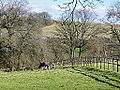 Horse in dorset.jpg