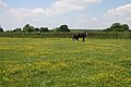 Horses in a field - geograph.org.uk - 1063455.jpg