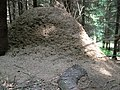 Huge ant-hill - panoramio.jpg