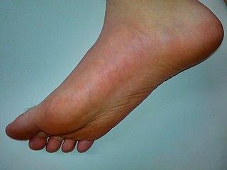 Foot Anatomical structure found in vertebrates