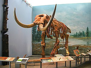 Museum of the Earth - The Hyde Park mastodon