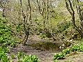 Ibarakawacho, Higashiomi, Shiga Prefecture 527-0216, Japan - panoramio (1).jpg