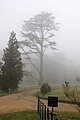 Ickworth House, Suffolk, England -mist-2March2012 (4).jpg