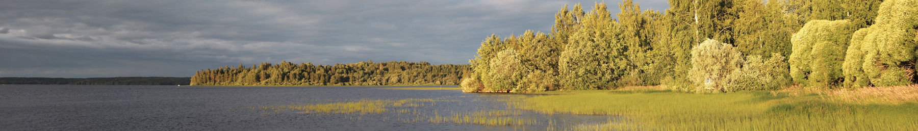 Ikaalinen banner lake and forest.jpg
