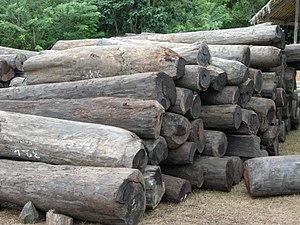 English: Illegal rosewood stockpiles in Antala...