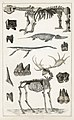 Illustration from A History of the Earth and Animated Nature by Oliver Goldsmith from rawpixel's own original edition of the publication 00076.jpg
