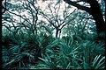 Inland forests at Cumberland Island National Seashore, Georgia (51db718f-346b-4a9d-af5a-7188ab5392bd).jpg
