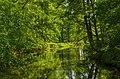 Innerer Unterspreewald Wasserburger Spree 03.jpg