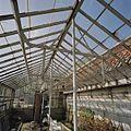 Interieur kas met stalen spanten - Aalsmeer - 20404737 - RCE.jpg