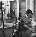 Inventarissen in Artis, een van de verzorgers bij de apen, Bestanddeelnr 915-8894.jpg