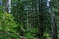 Iron Mountain Mark Gorzynski IMG 2095.jpg