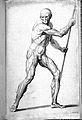 J. Tinney, Compendium anatomicum...; male body Wellcome L0027878.jpg