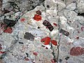 Jasper pebbles in quartzite (Lorrain Formation, Paleoproterozoic, ~2.3 Ga; Ottertail Lake Northeast roadcut, near Bruce Mines, Ontario, Canada) 13 (47656057162).jpg