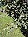 Jawaharlal Nehru Memorial Botanical Gardens, Srinagar 12.JPG