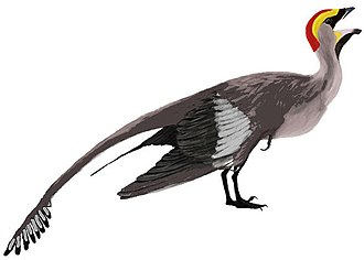 Avialae - Image: Jeholornis mmartyniuk wiki (fipped)