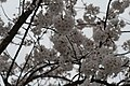 Jim West Central Church Collierville Tn Trees Blooming (251212995).jpeg