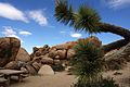 Joshua Tree National Park (3433752616).jpg