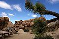 Joshua Tree National Park (3433752616).jpg