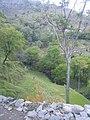 Jungle khai gala 13.jpg