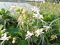 Jungli Flower 2.jpg