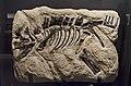 Juvenile Montanoceratops.jpg